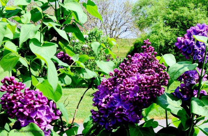 deepest purples
